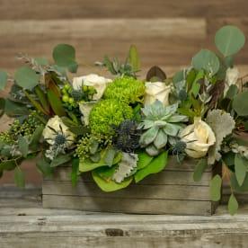 Send Succulents Reno Nv Flower Delivery Bloomnation