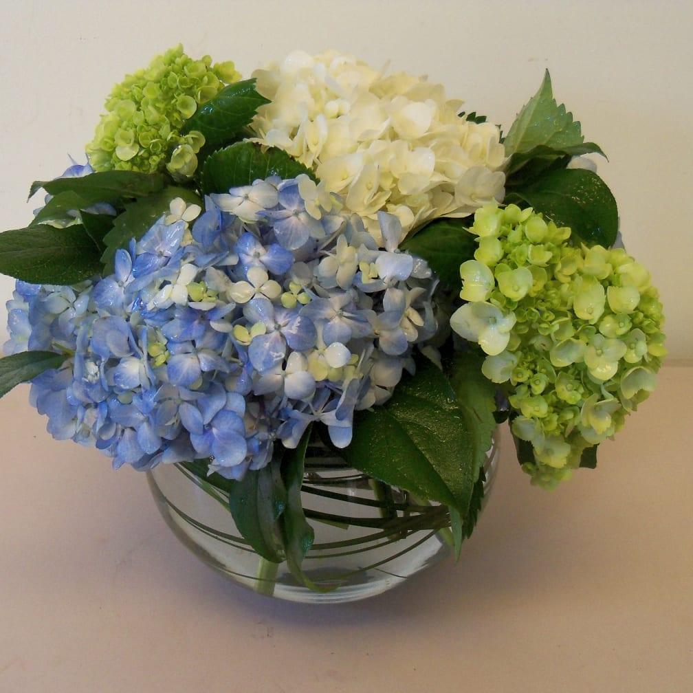 Blooms of Hydrangea