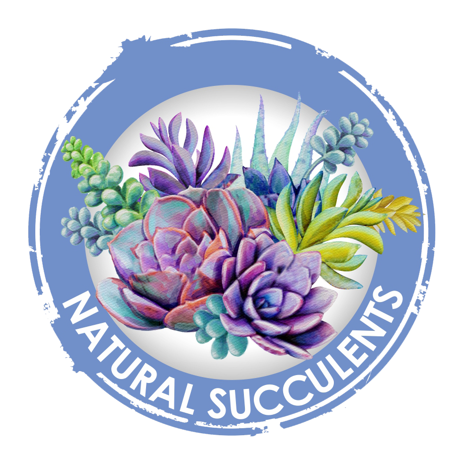 Granada Hills Florist   Flower Delivery by Natural Succulents