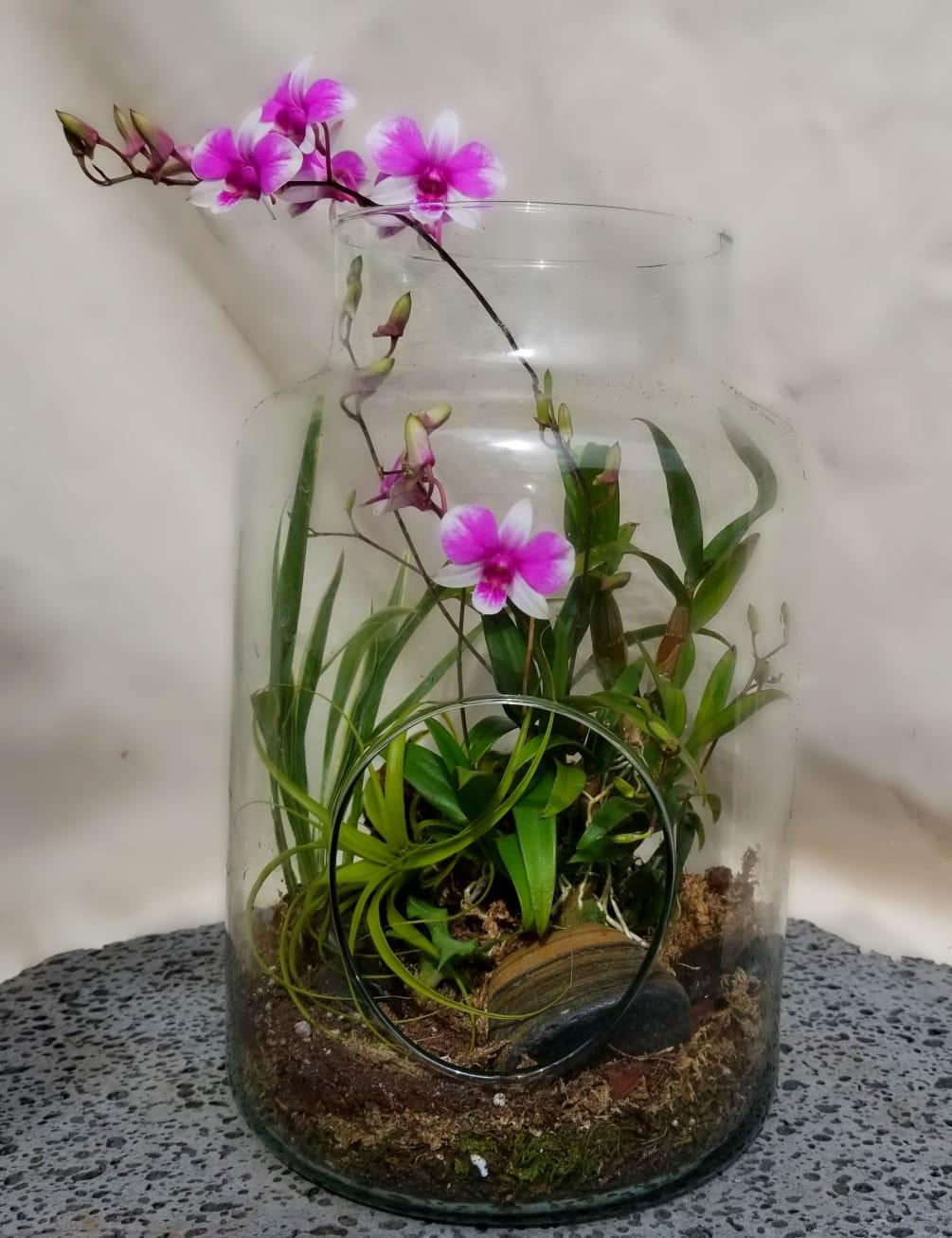 Flowering Orchid Open Terrarium By The Blue Iris