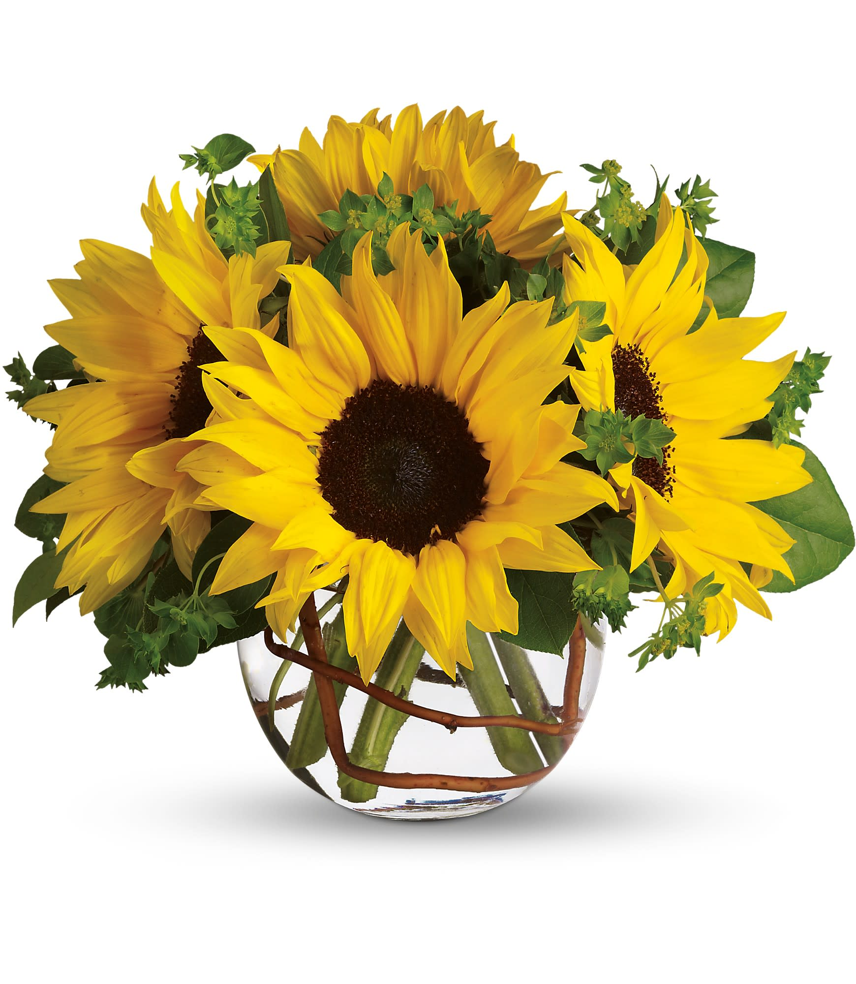 Sunny Sunflower By Teleflora In Groton Ma Lavender