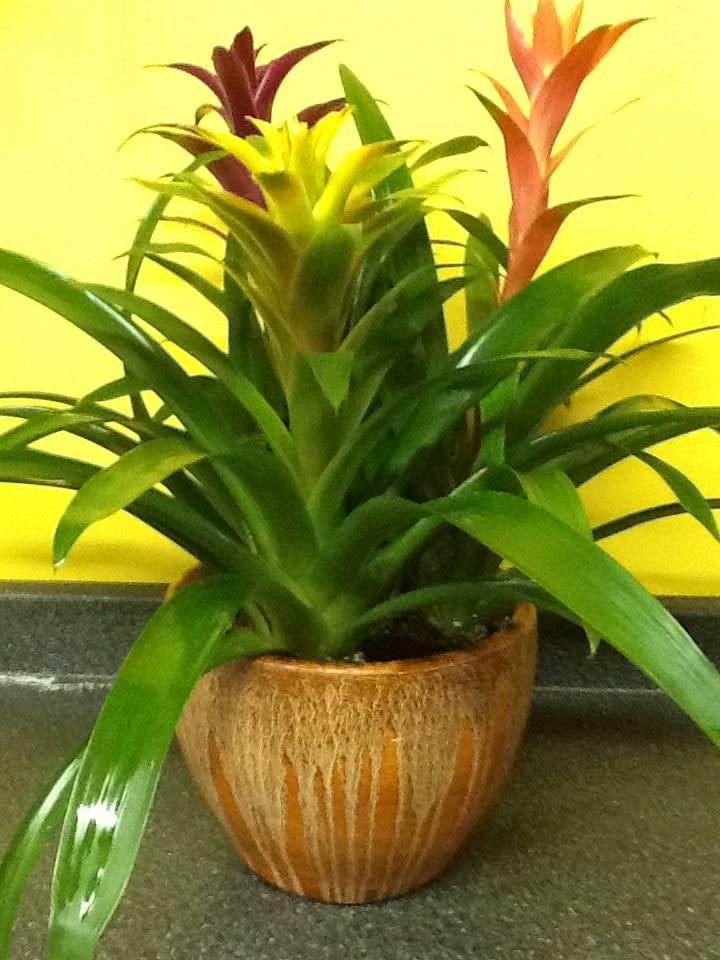 tropical plant garden in Huntington, NY   Funky Flower Shop