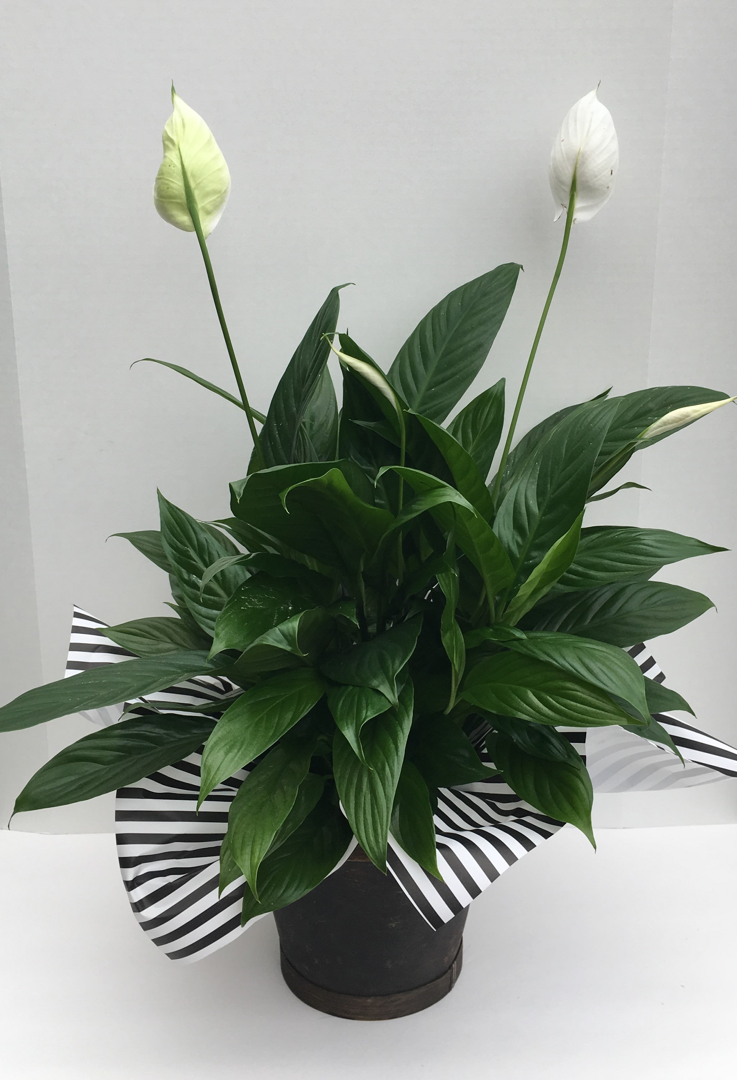 Tokeo la picha la peace lily plant
