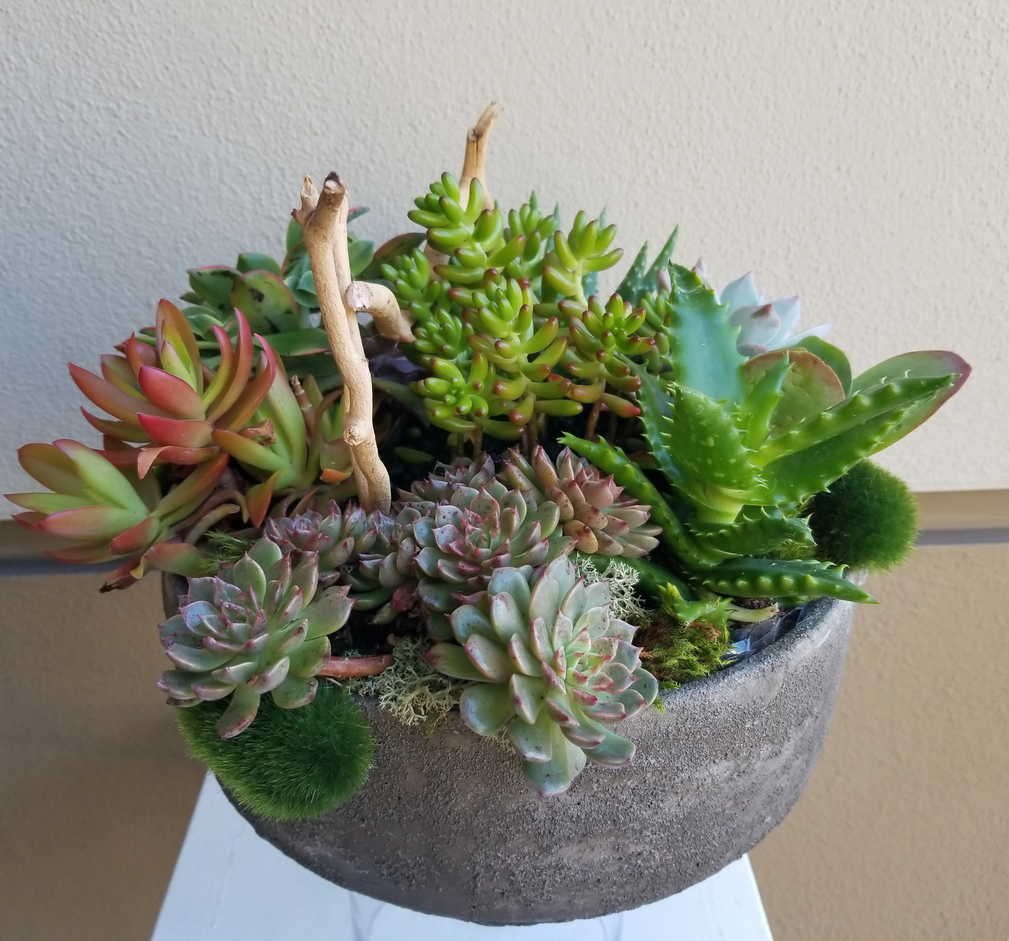 Colorful Succulents In Beverly Hills Ca Apropos Floral Event Design