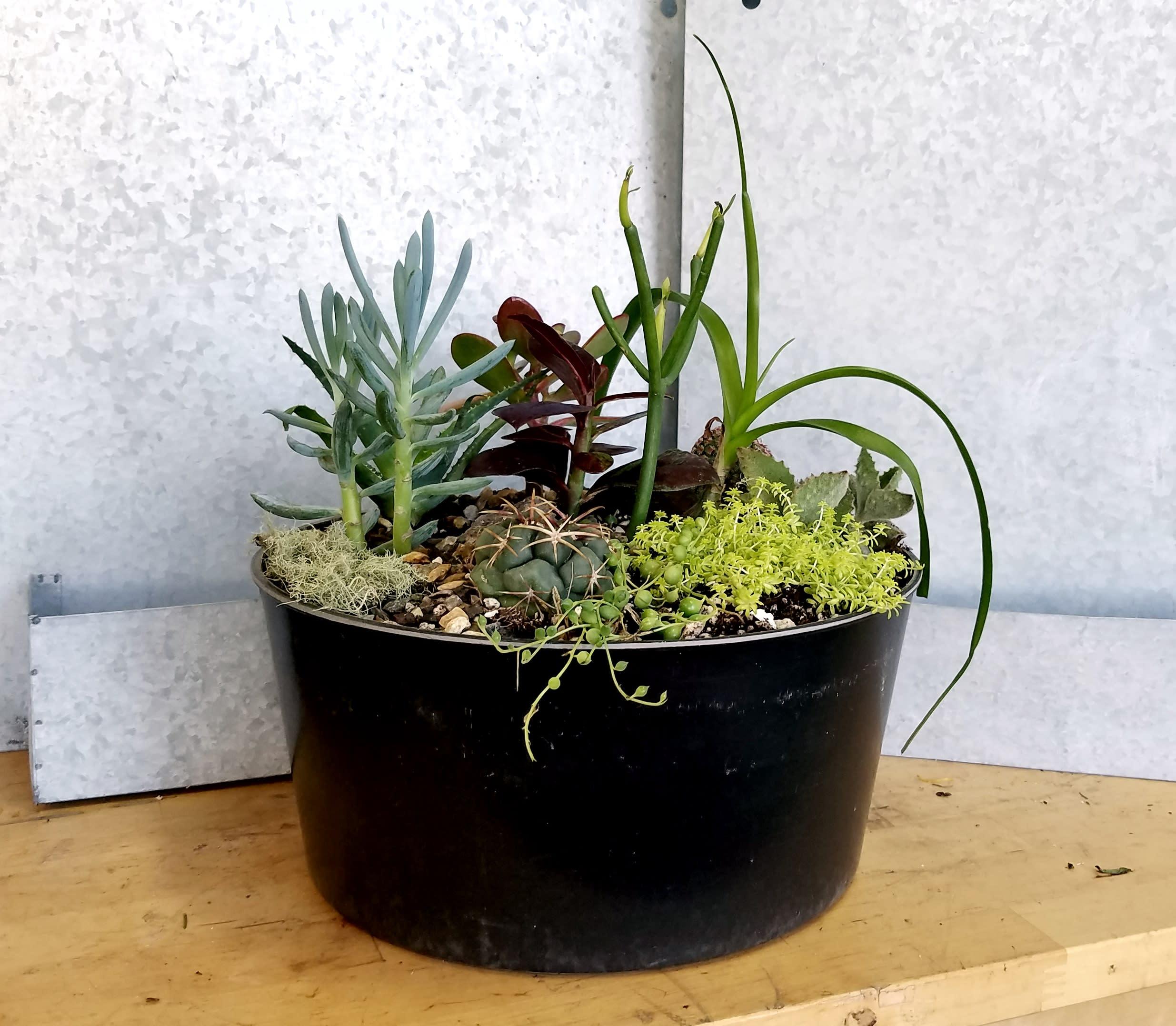 Large Succulent Planter In Berkeley Ca Lee S Florist Nursery
