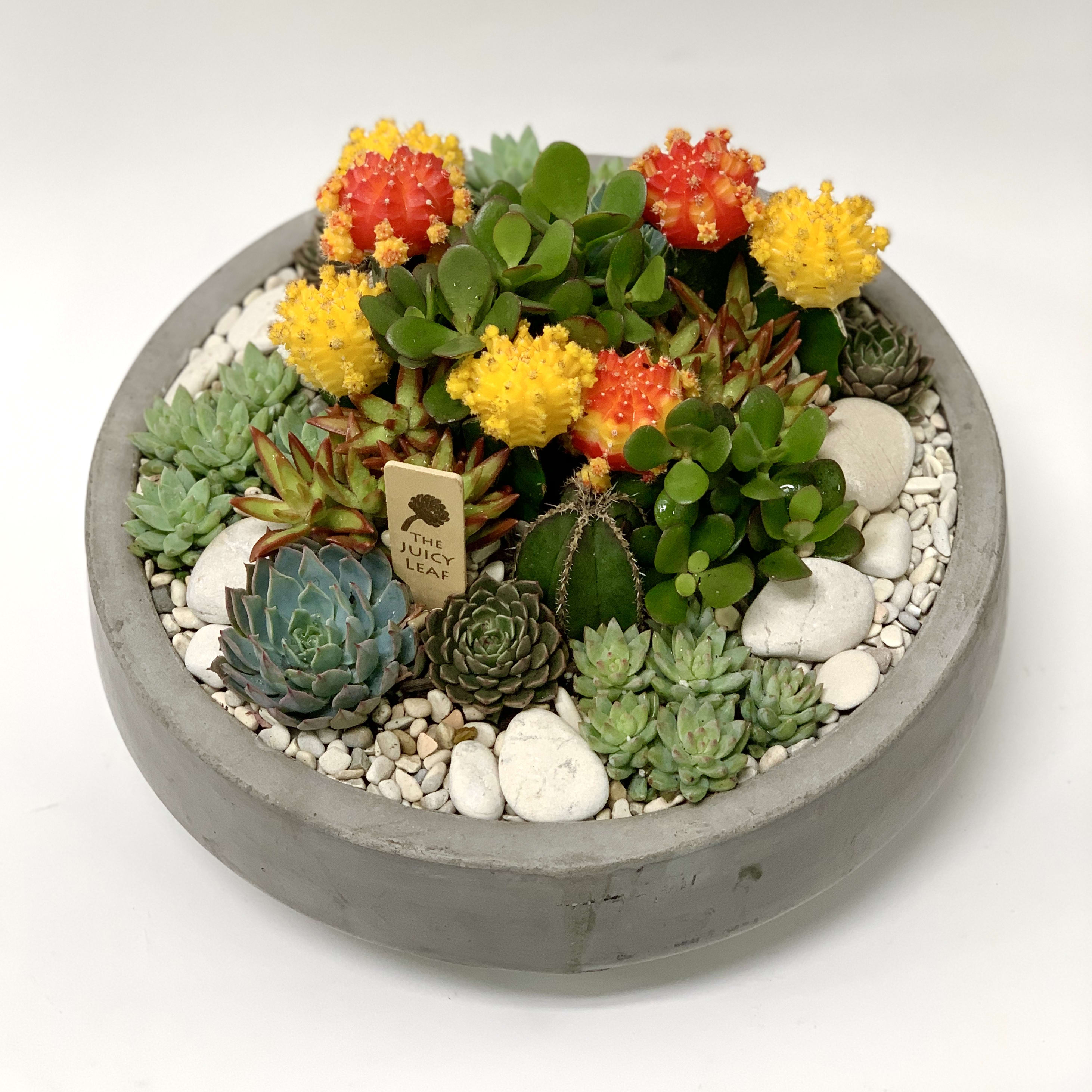 Bright Succulent And Cacti Arrangement In Cement Bowl By The Juicy Leaf