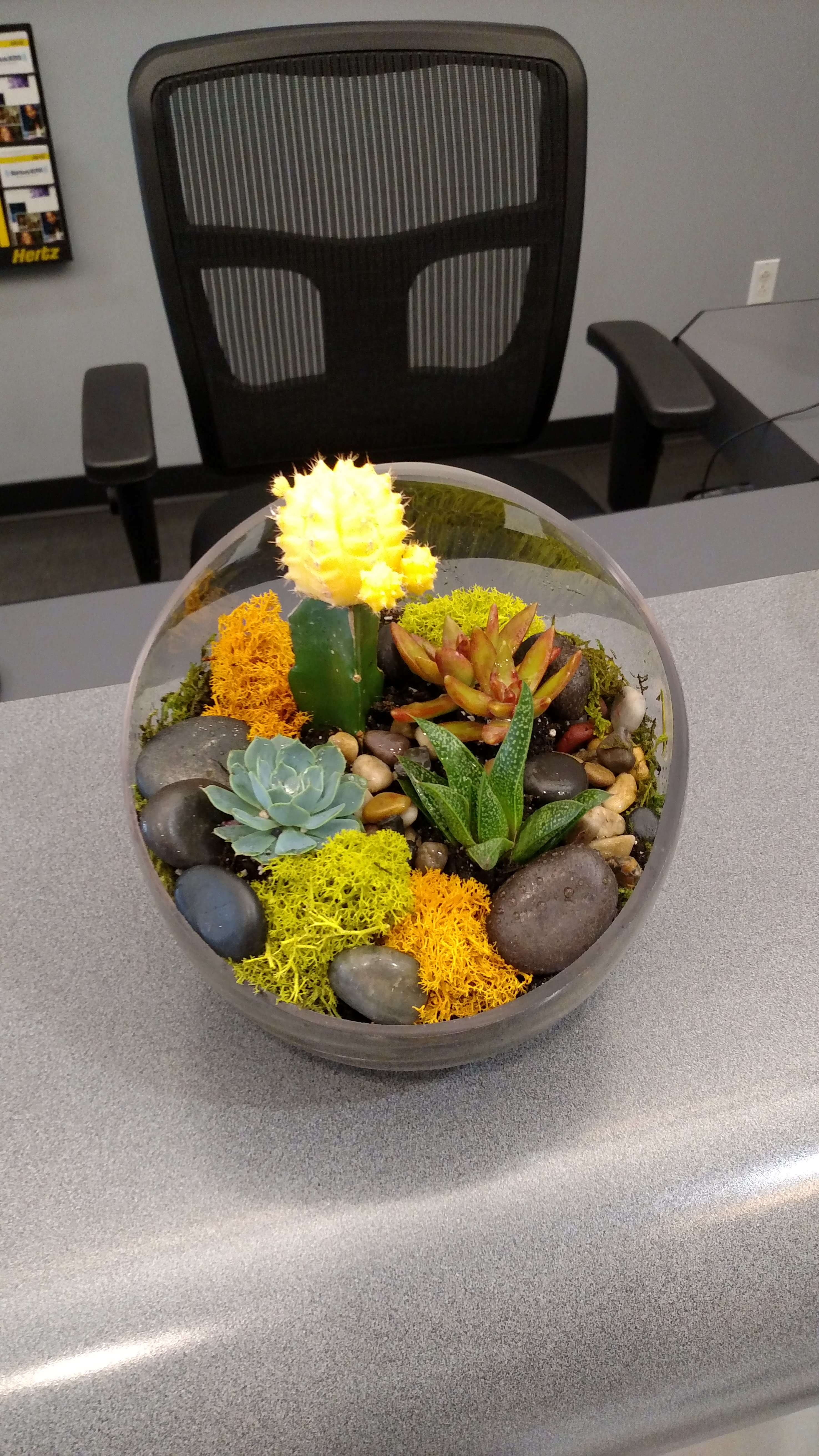 Small Succulent Arrangement By Showcase Flowers