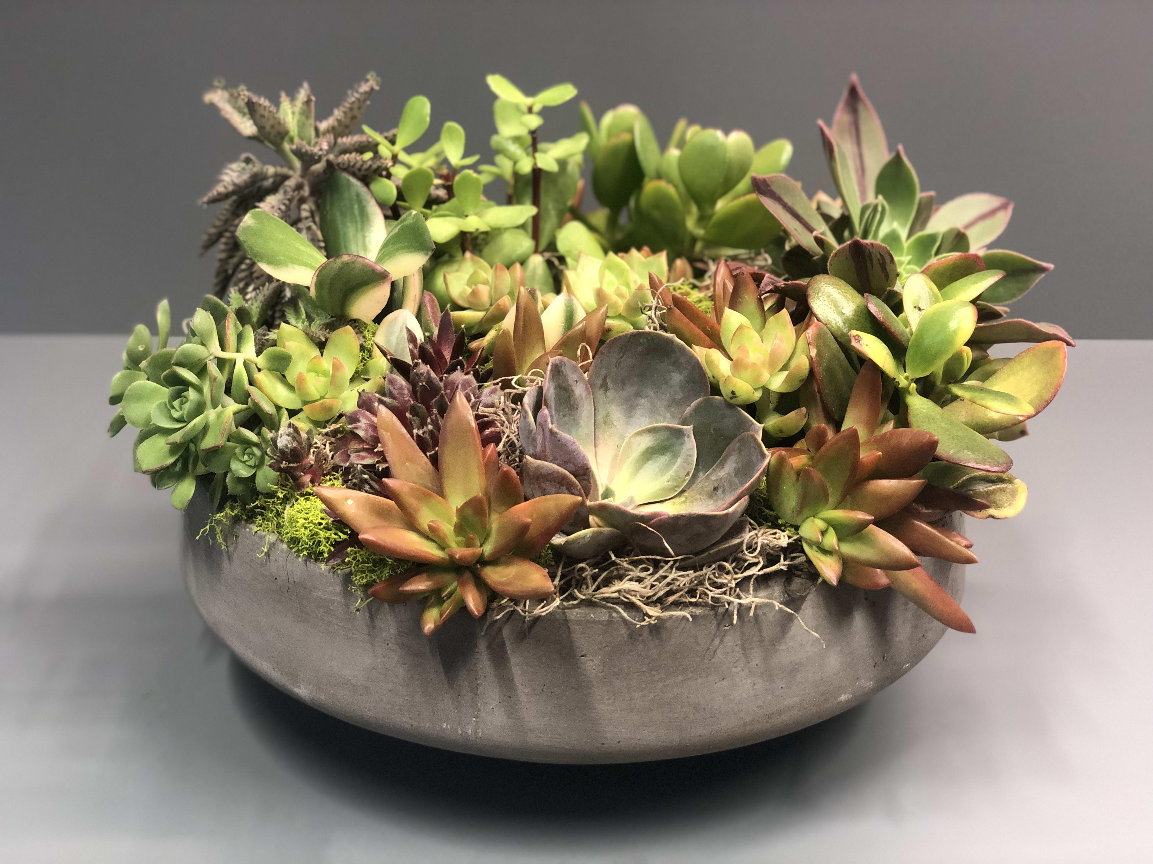 Large Succulent Arrangement By Green Bouquet Floral Design