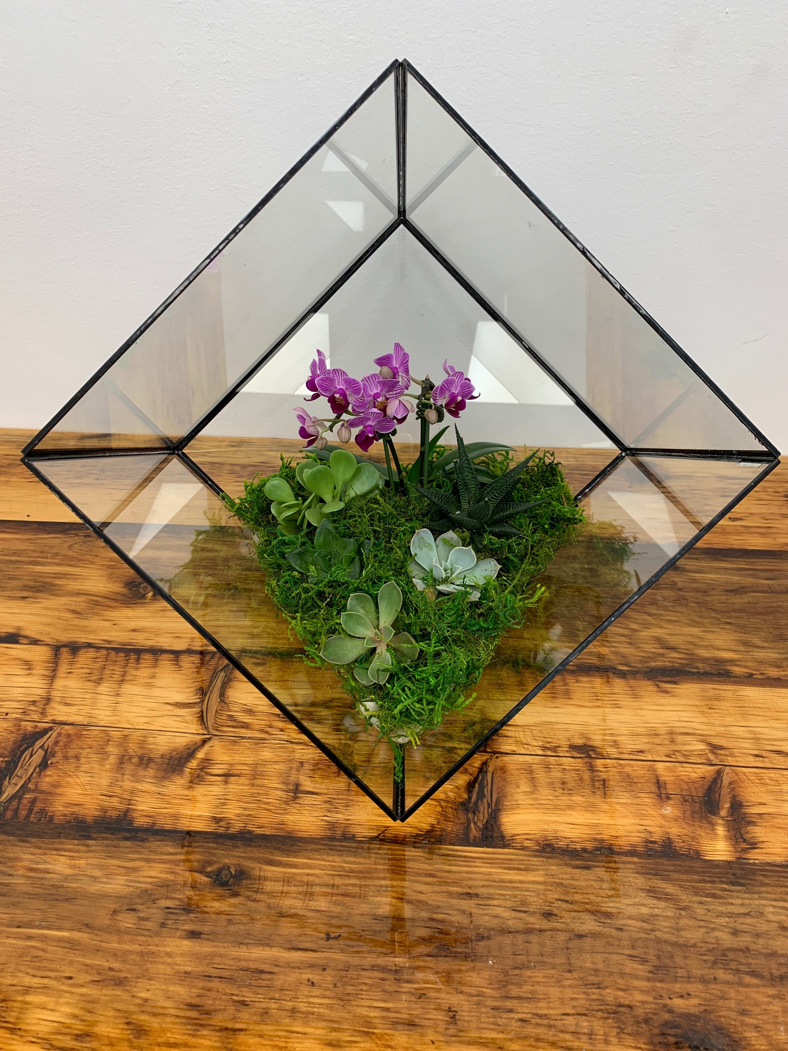 Orchid Terrarium In Great Neck Ny Dazzling Events