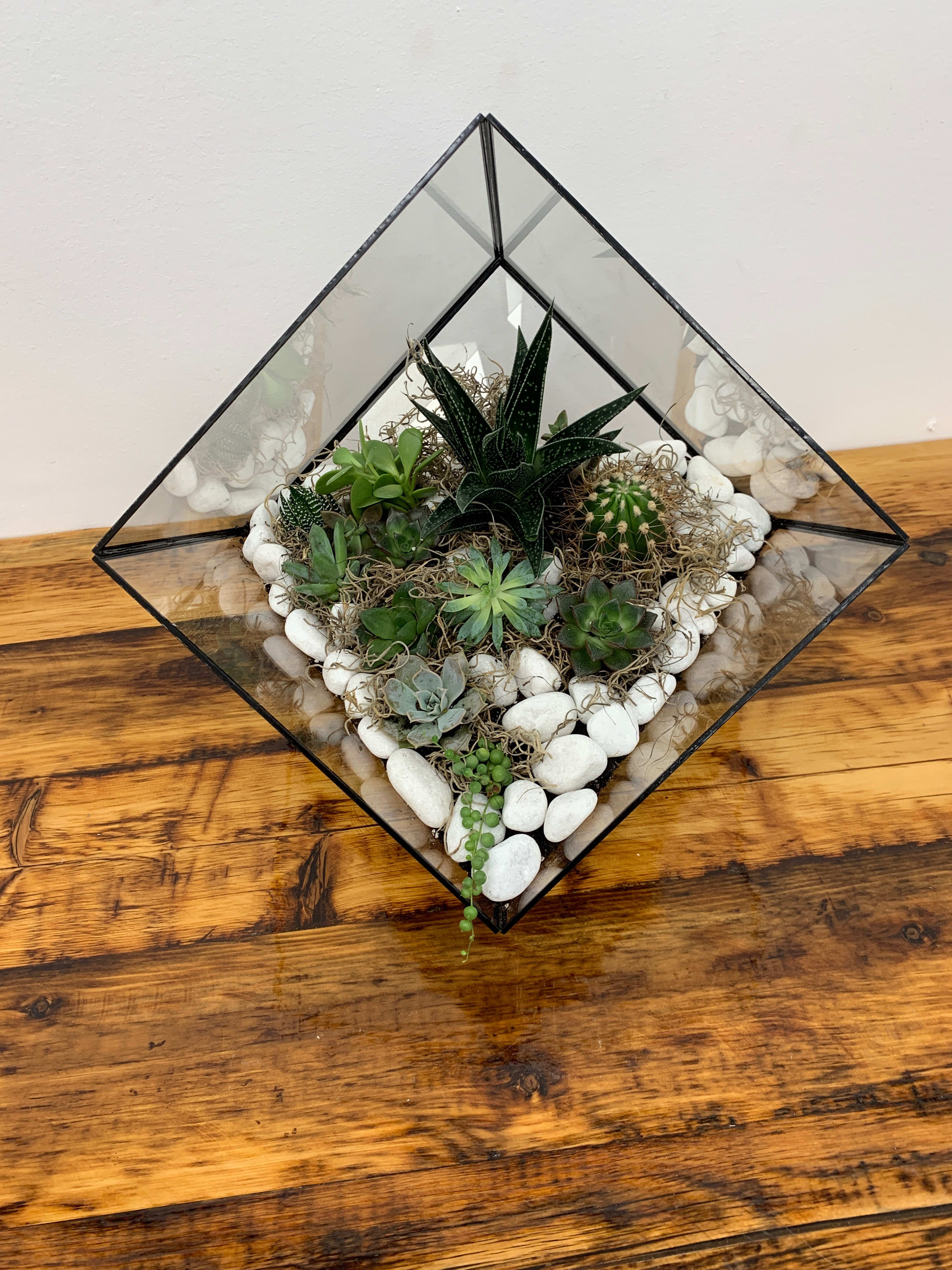 Succulent Terrarium In Great Neck Ny Dazzling Events