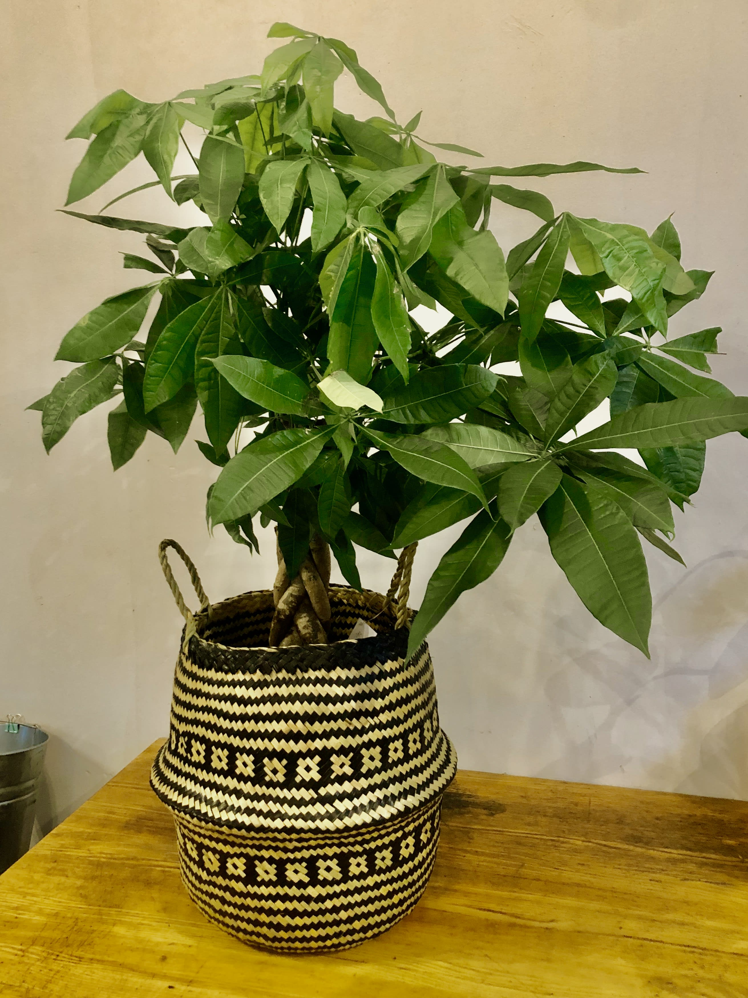 10 Braided Money Tree In A Woven Basket In Chicago Il Zins Flowers