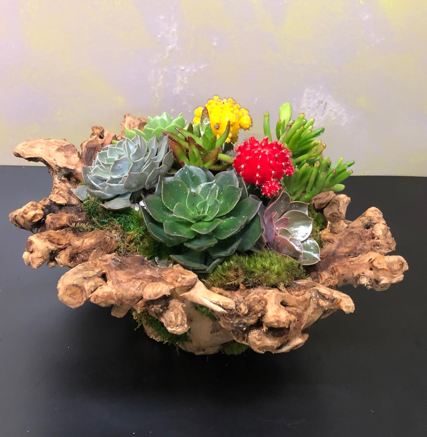 Driftwood Succulent Bnp4 In Los Angeles Ca Effusive Flowers