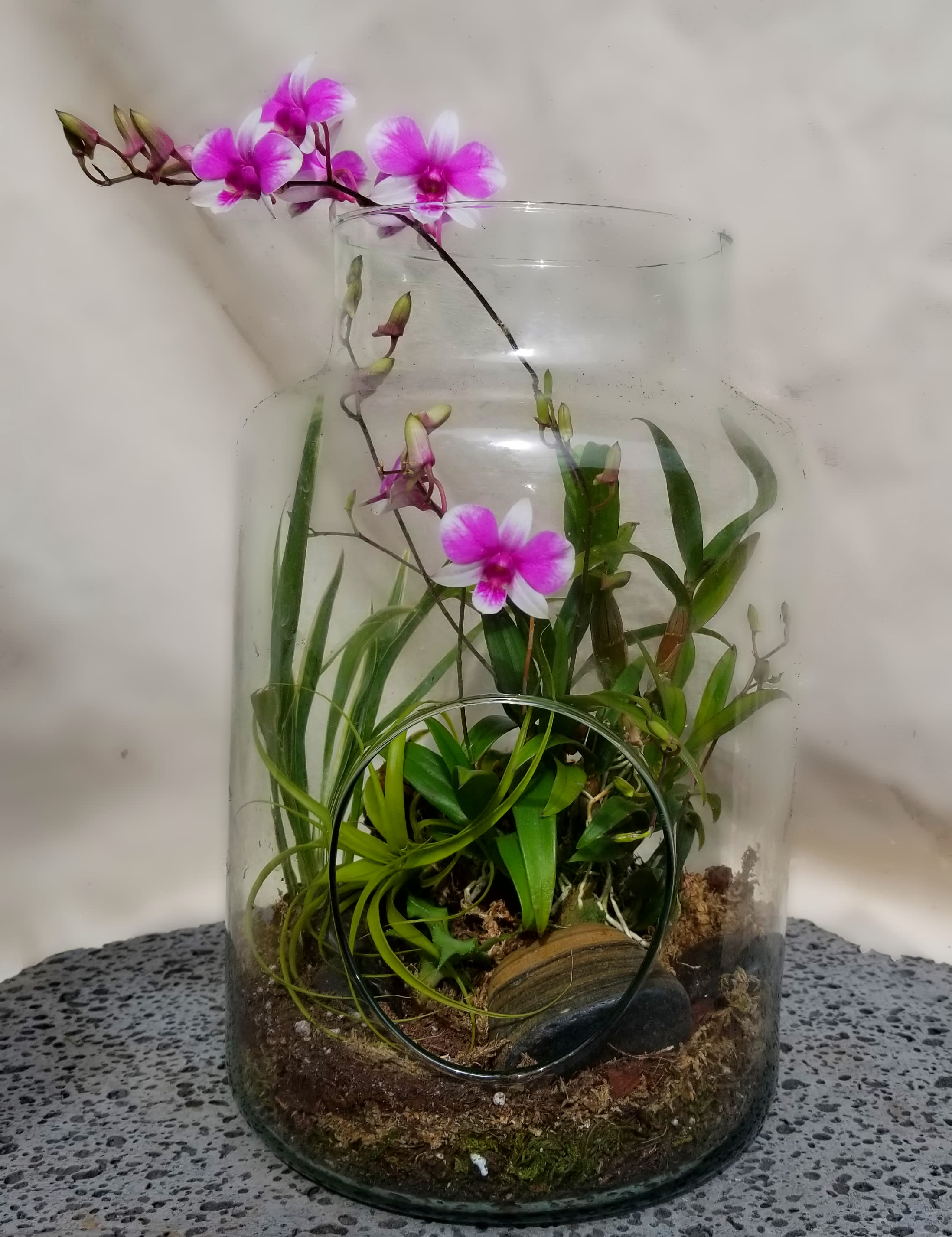 Flowering Orchid Open Terrarium By The Blue Iris