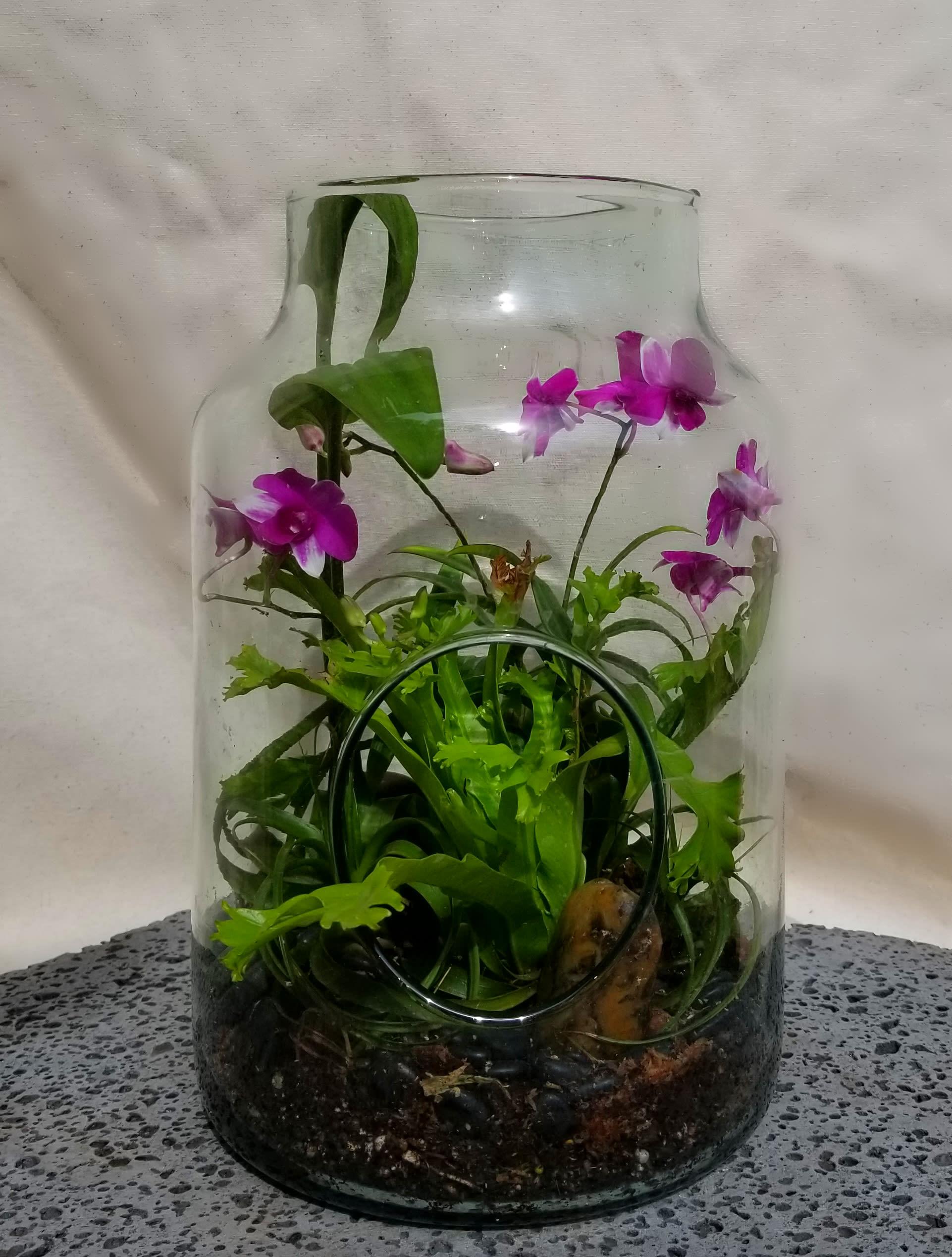Mike S Mini Orchid Open Terrarium By The Blue Iris