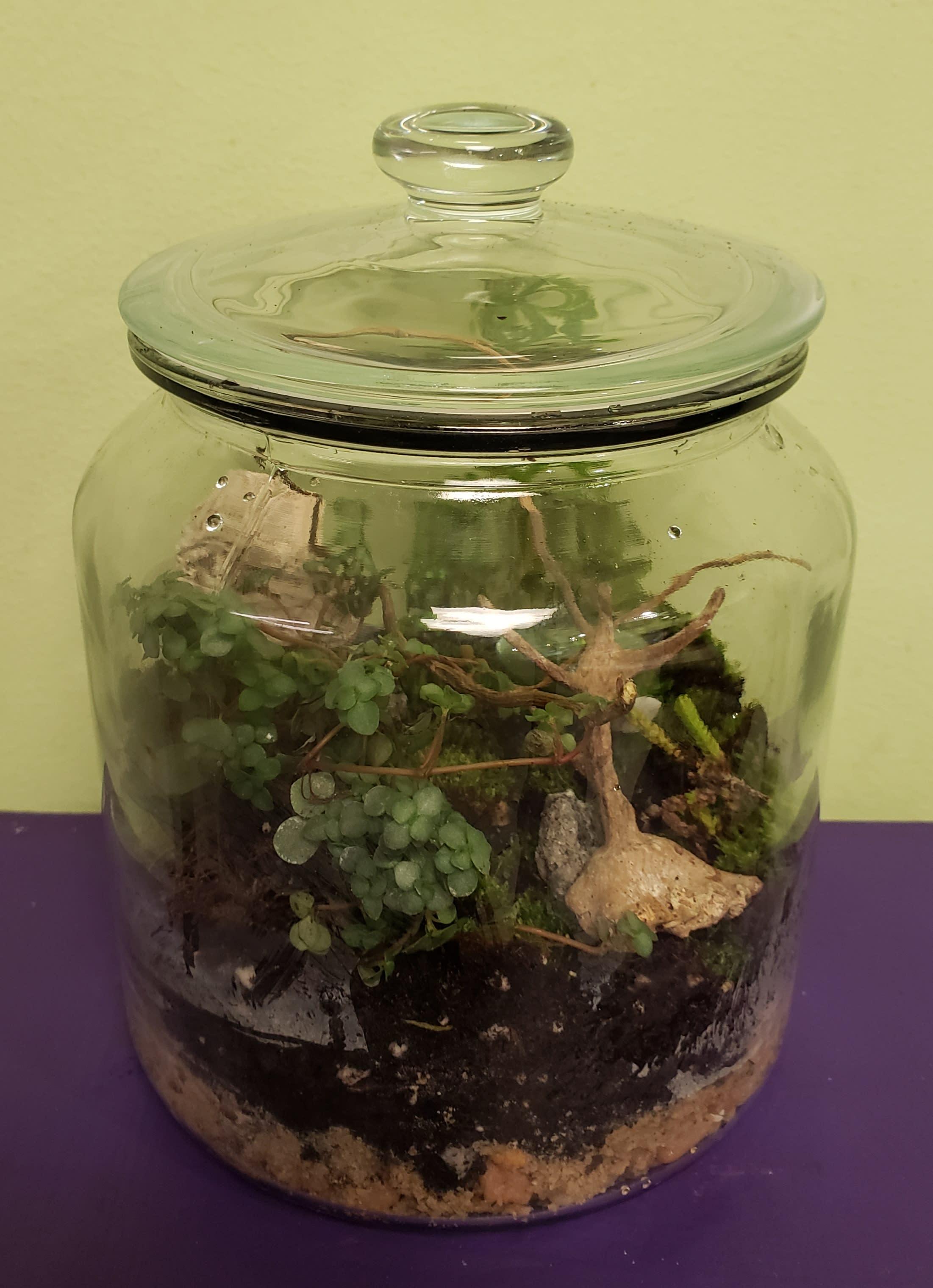 Self Sustaining Glass Lid Jar Terrarium In Philadelphia Pa Philadelphia Flower Market
