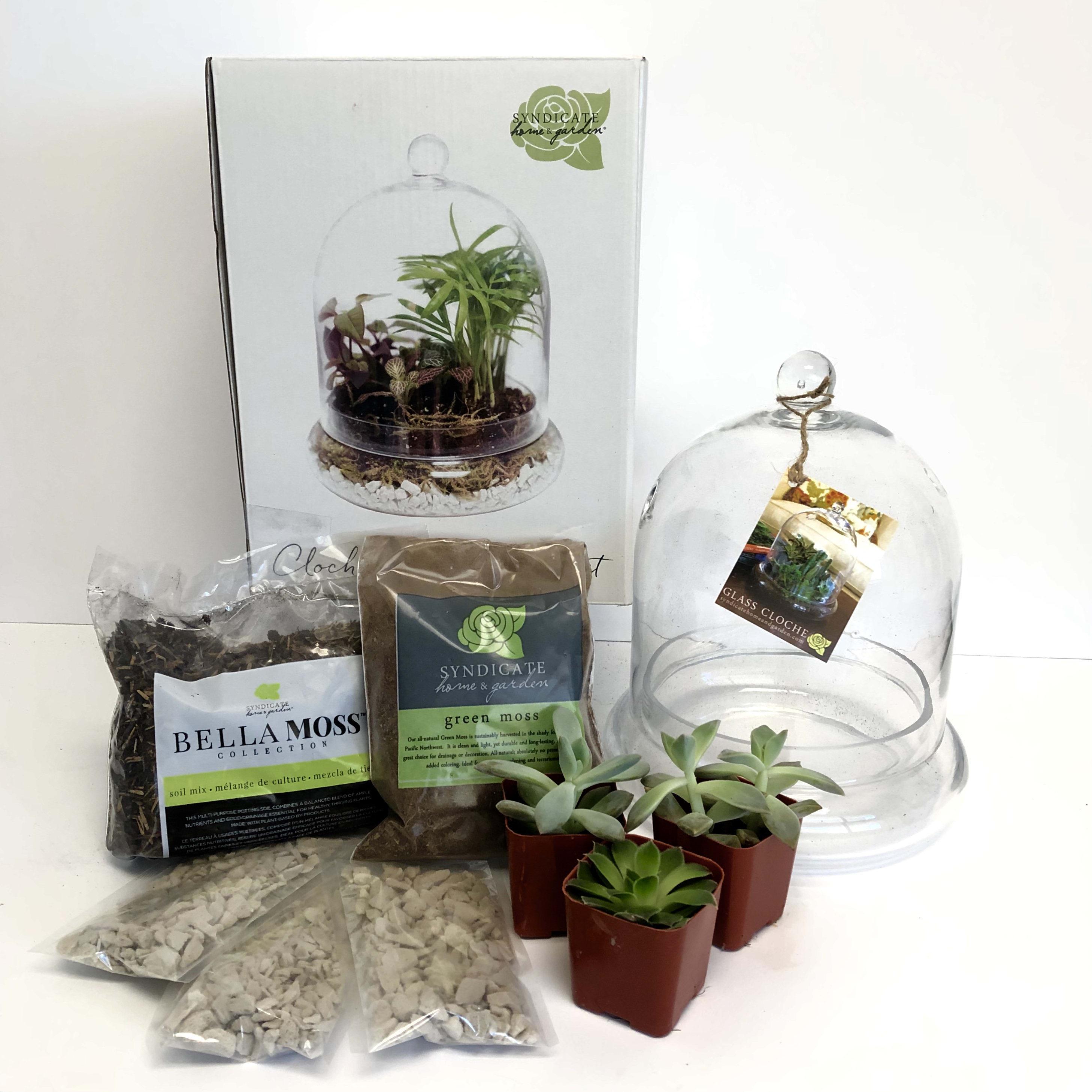 Diy Terrarium Kit In Phoenix Az Pjs Flowers Events