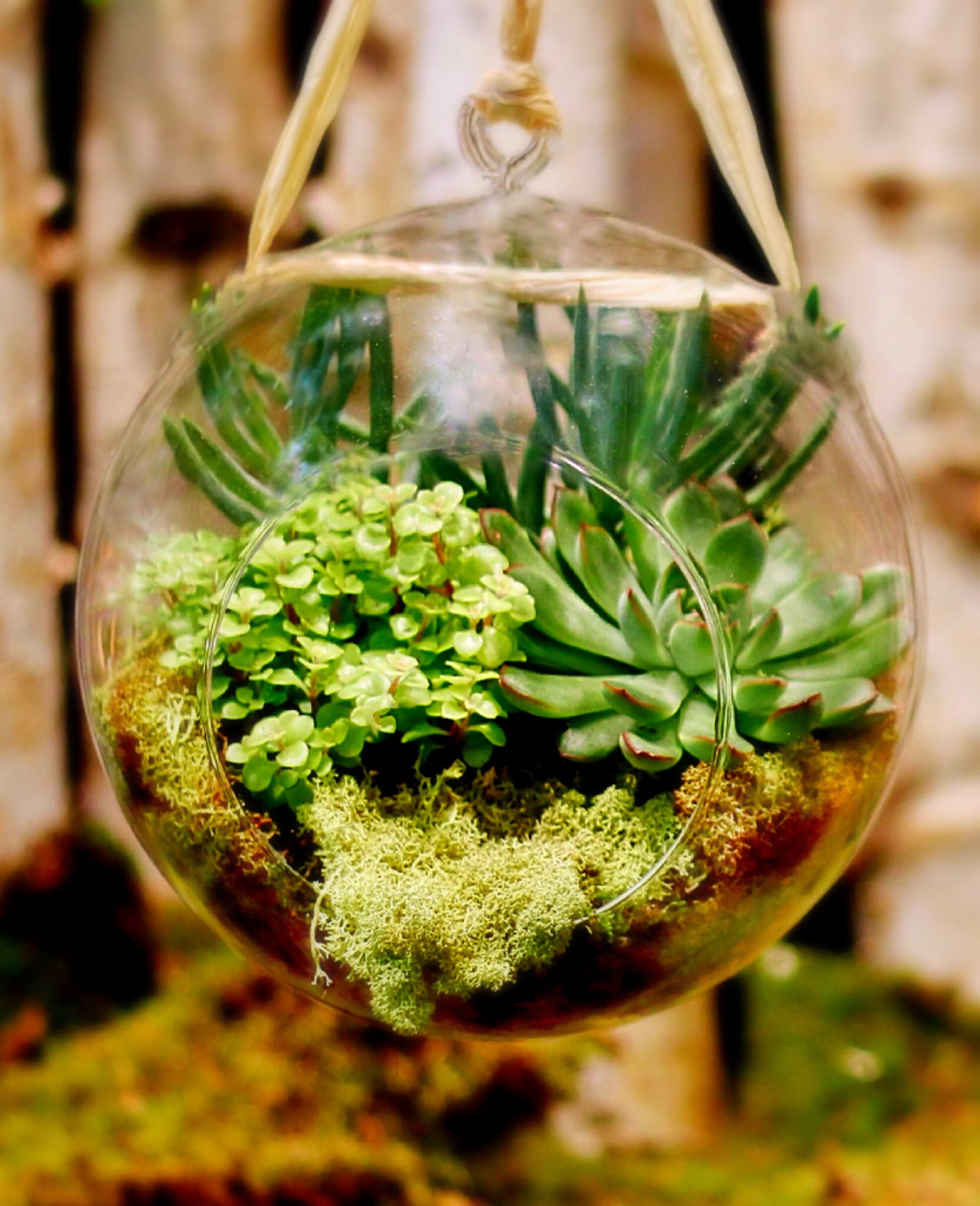 Stylish Hanging Terrarium By Flowers By Philip