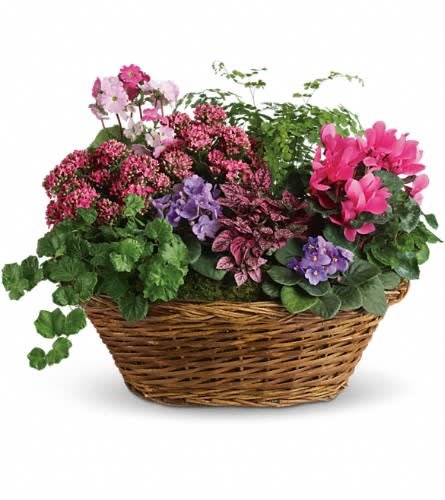 Simply Chic Mixed Plant Basket In Smithfield Ri Simply Elegant Flowers