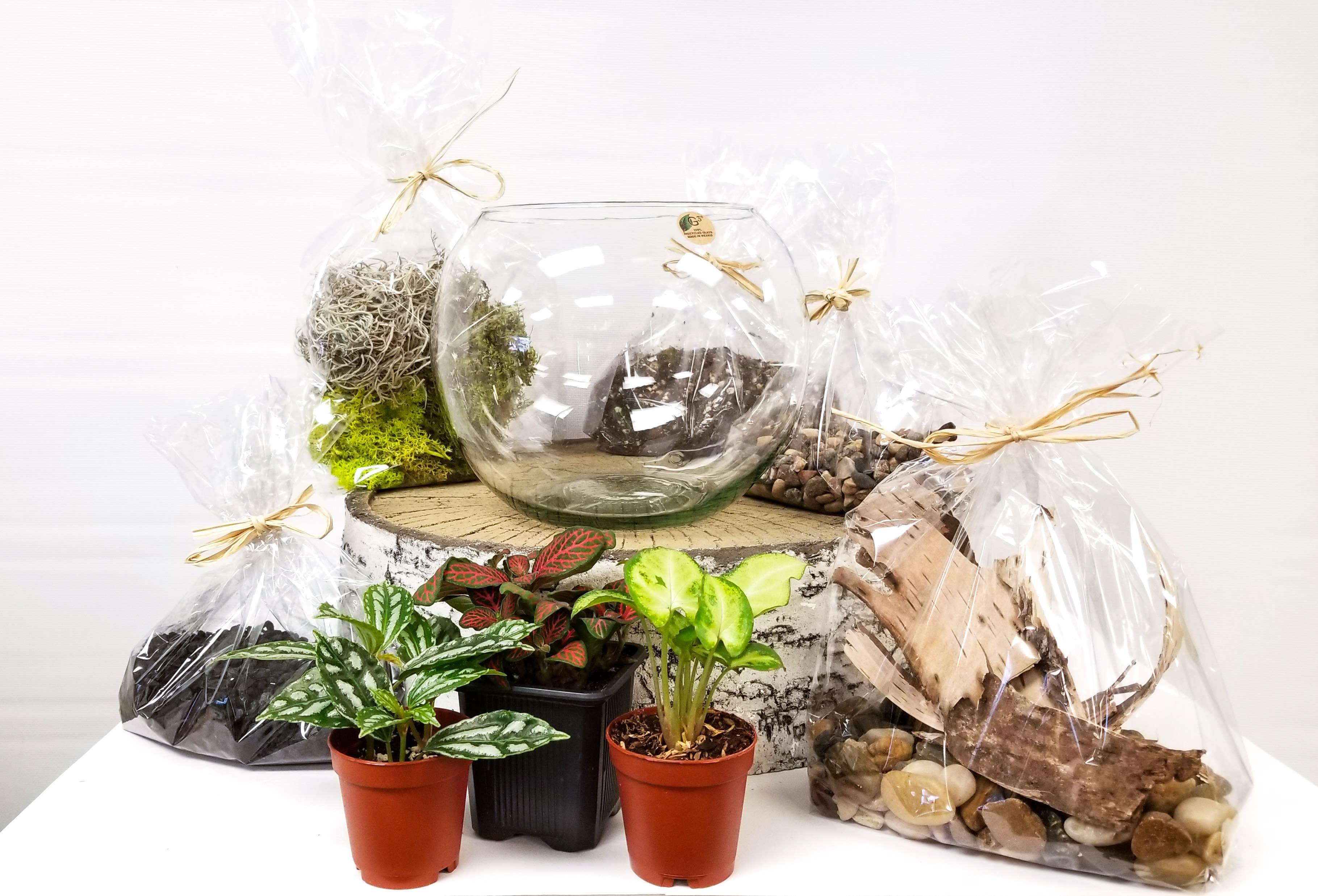 Diy Tropical Plant Terrarium Kit In St Paul Mn Your Enchanted Florist