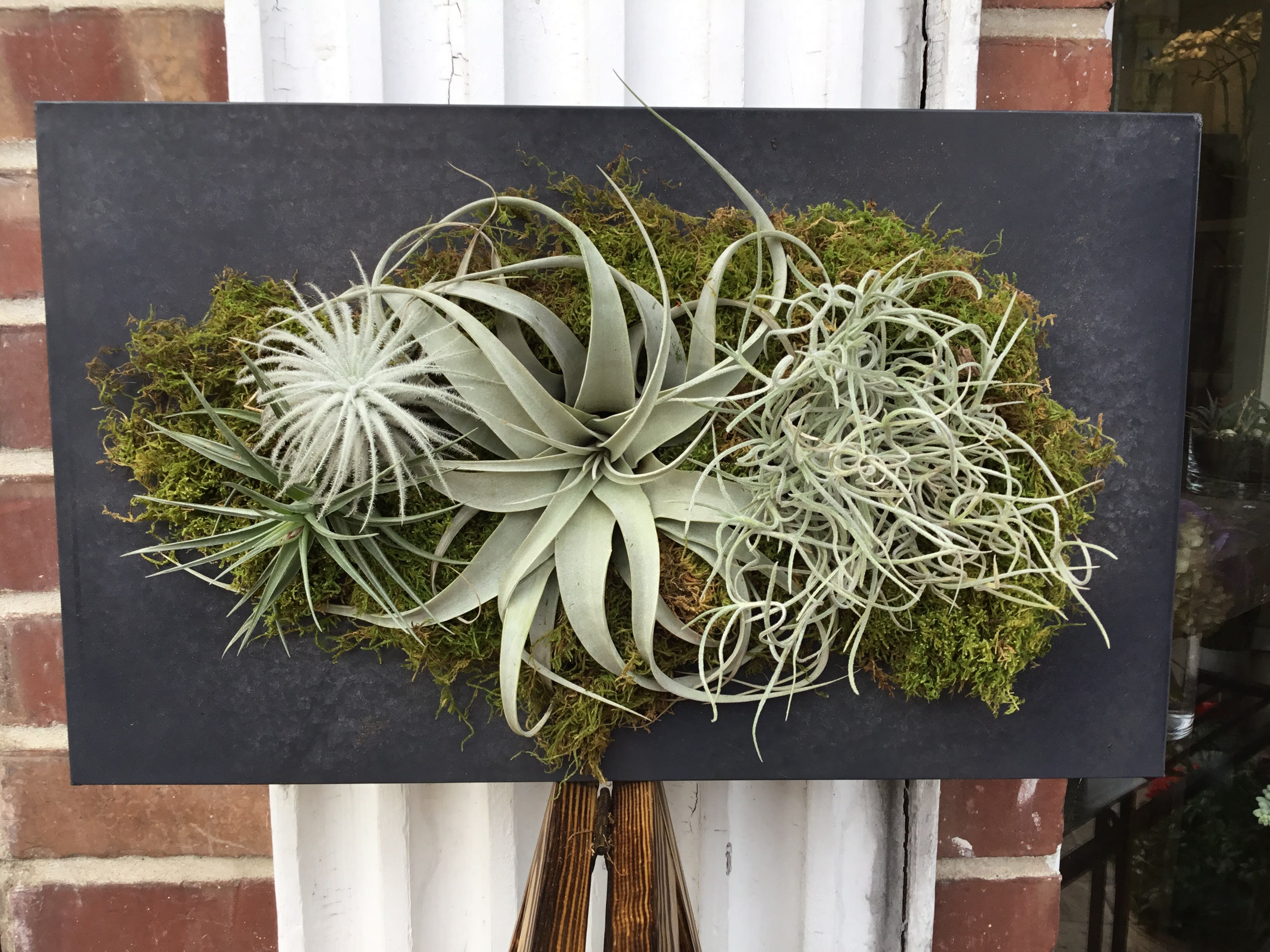 Air Plant Wall Hanger In Burlingame Ca Floral Art And Decor