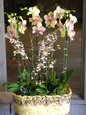 Phalaenopsis And Oncidium Orchids In Los Angeles Ca Flowers With Love