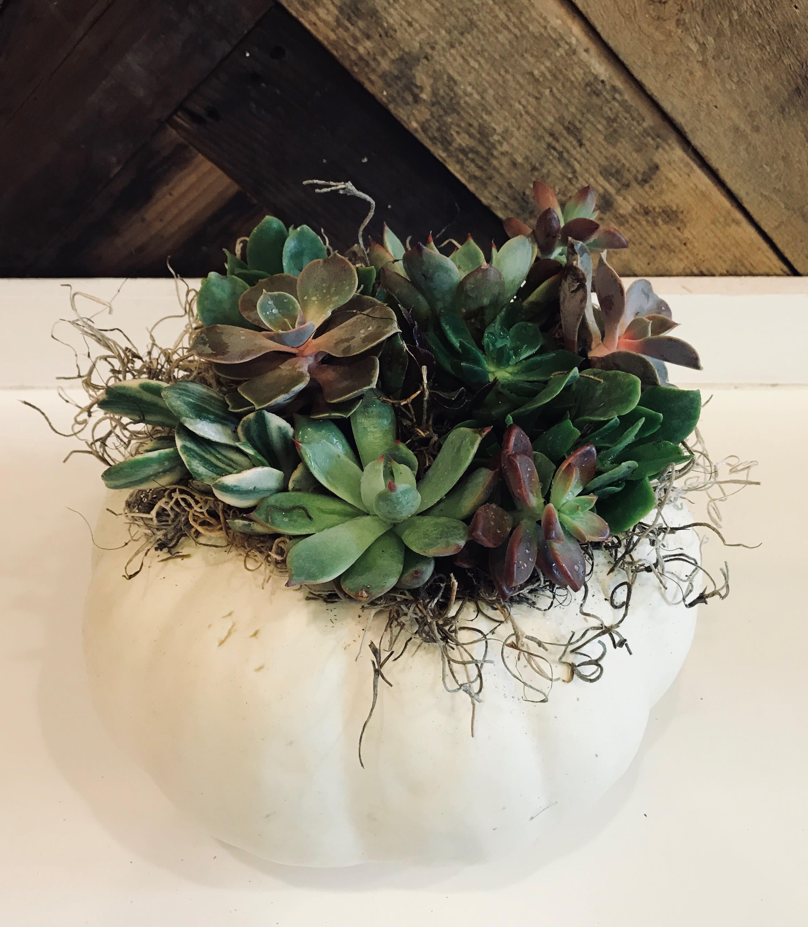 Living Succulent Pumpkin Centerpiece Available September November In Port Orchard Wa Pistil Design