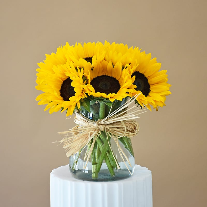 Brighten My Day - 10 Sun Flowers in clear glass vase with Raffia bow - W607 in San Francisco, CA | Fillmore Florist San Francisco