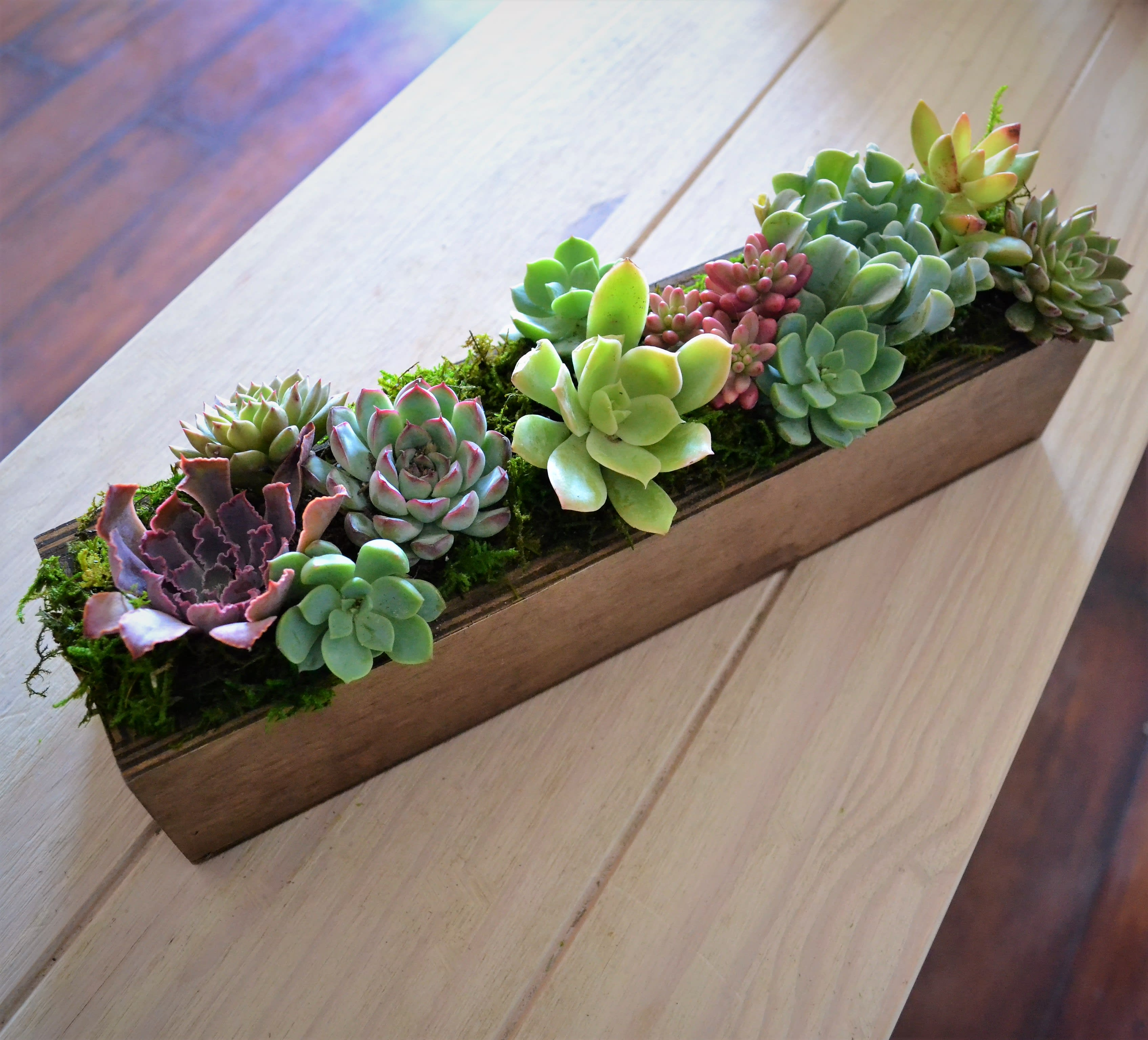 Succulent Planter By My Blooming Business