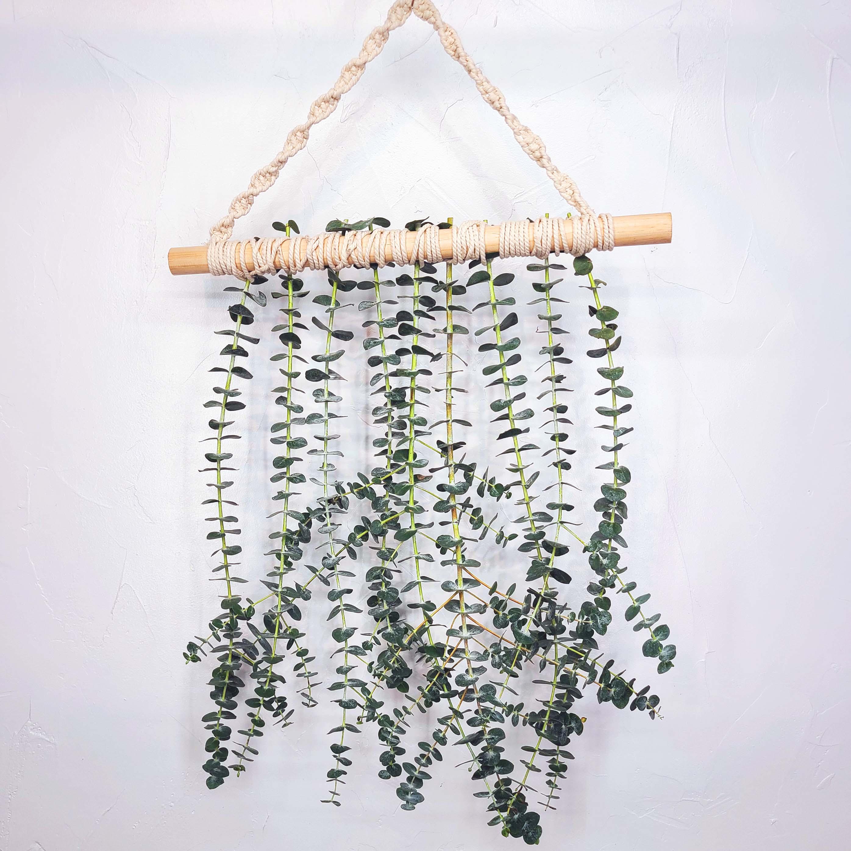Fresh Real Eucalyptus Eucalyptus Wall Hanging Boho