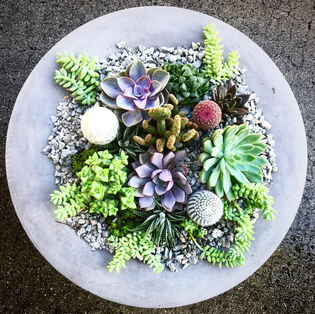 Wowsome Premium Succulents Cactus Arrangement In A Cement Pottery By Wowsome Blossom