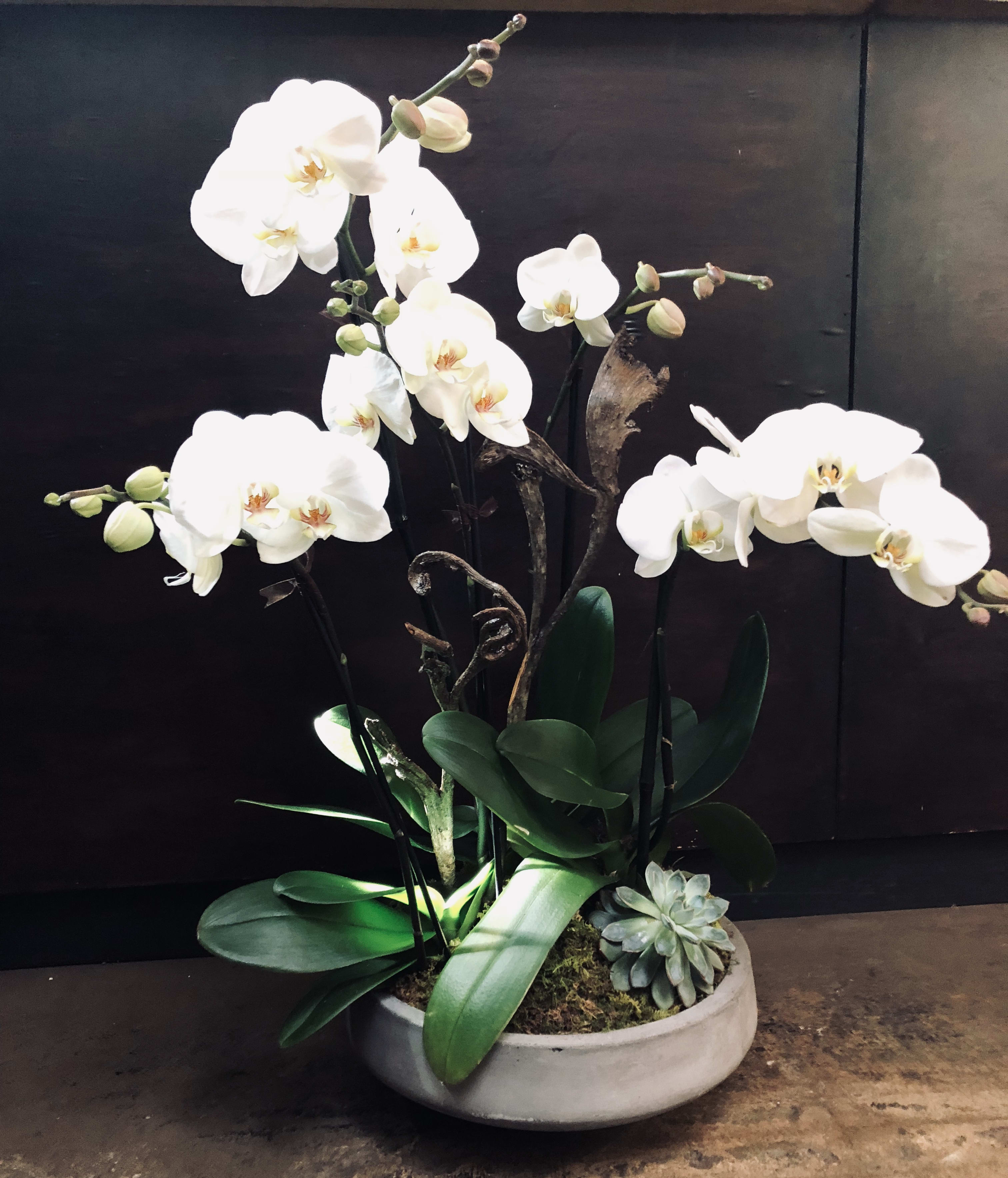 Premium White Phalaenopsis Orchids With Succulent In Mill Valley Ca Green Door Design