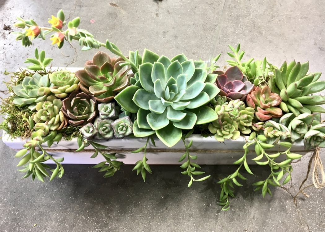Colorful Succulents In Long White Ceramic Planter In Los Angeles Ca Wowsome Blossom