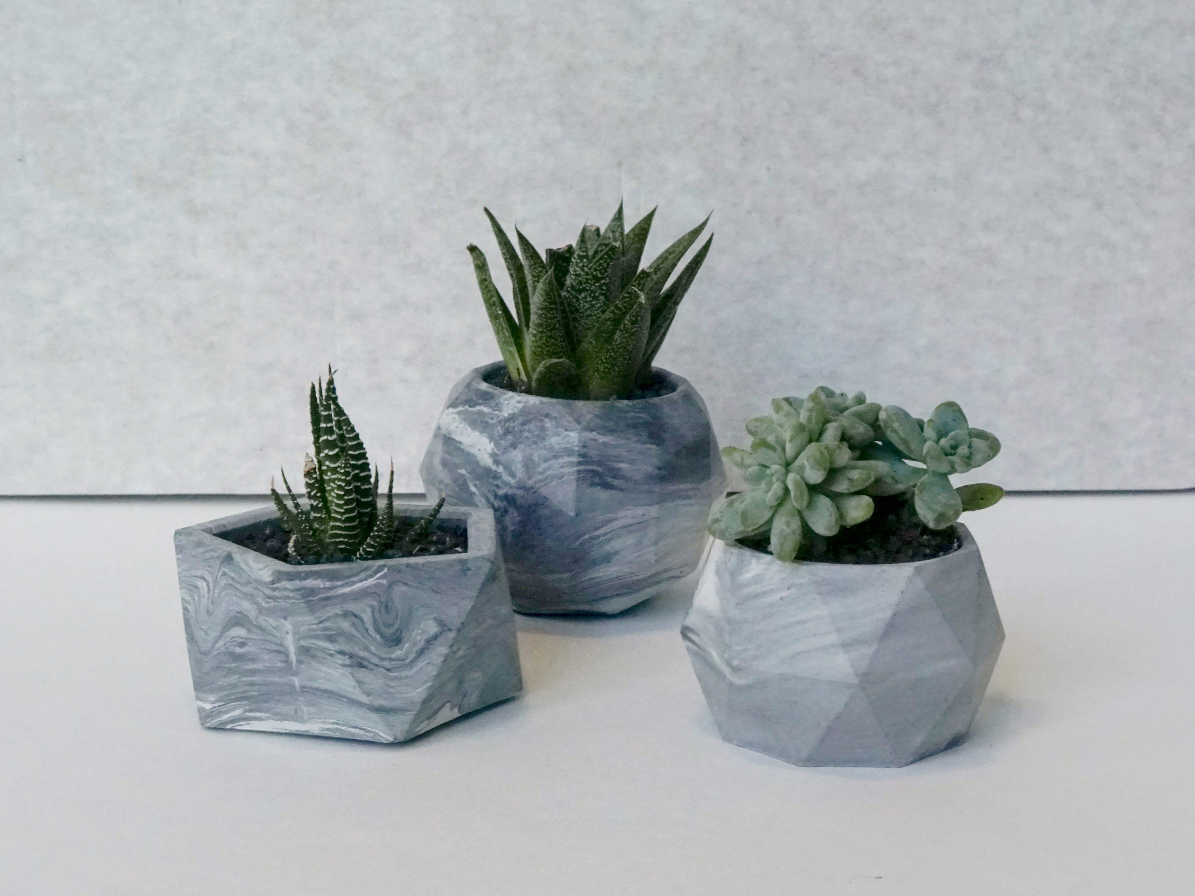 Succulent Concrete Planter